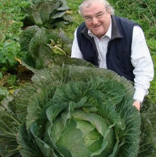 GIANT CORNISH CABBAGE PLANTS Cabbage
