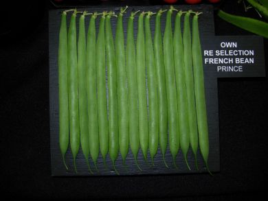Reselected Exhibition Climbing French Bean