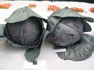 Rovite Red Cabbage F1