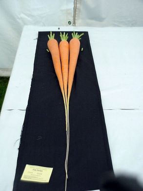 Long Carrot (my own re selected seed from New Red Intermediate)