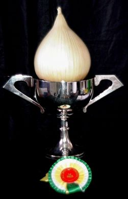 Large Exhibition Onion(Own re-selection)