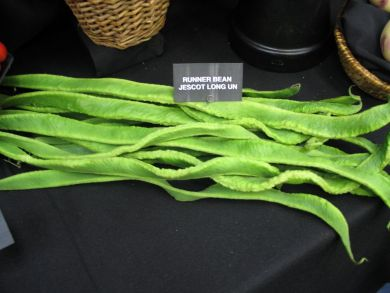 Longest Runner Bean (Jescot-Long-Un)
