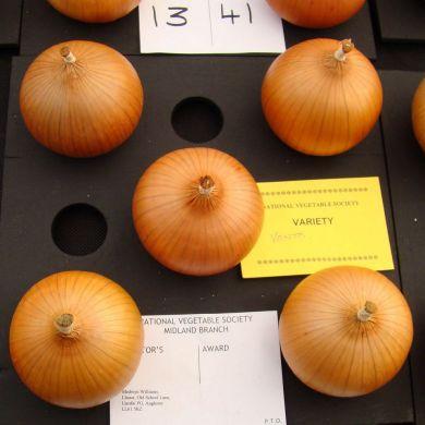 Vento 250 gram onion