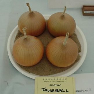 TOUGHBALL - Onion Plants for the under 250 grams class.