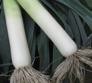 Warwick F1 Winter leek