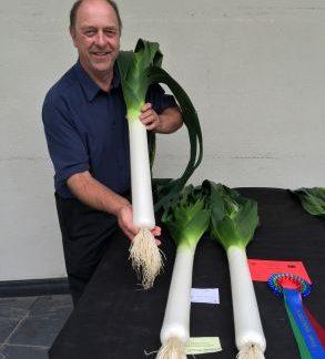 Leeks - Welsh seedling - PREMIUM PLANTS