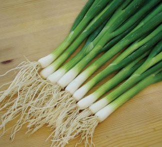 Carel Spring Onion