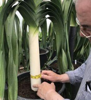 Blanch Leek Rooted bulbils - Llanedwen