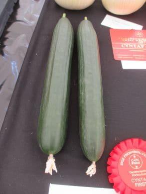 Kouper F1 Cucumber
