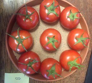 Y Ddraig Goch Tomato Plants.