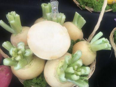 Oregon F1 Turnip