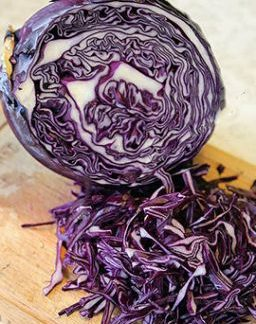 Klimaro F1 Giant Red Cabbage