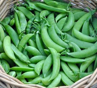 (New) Sugar Snap Pea